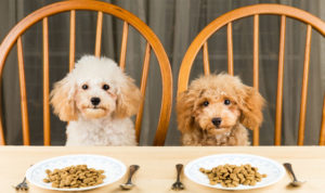 dogs sitting at dinner table